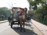 Camel Pose, Taj Mahal - Agra (2012)