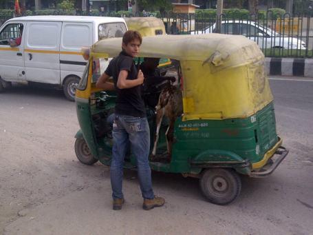 Goat in a Rickshaw