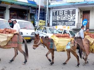 Tibet 50, Dharmsala, India 2013